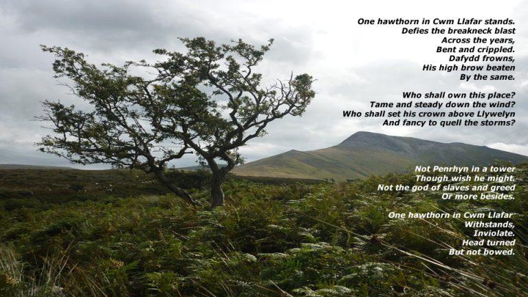 One Hawthorn