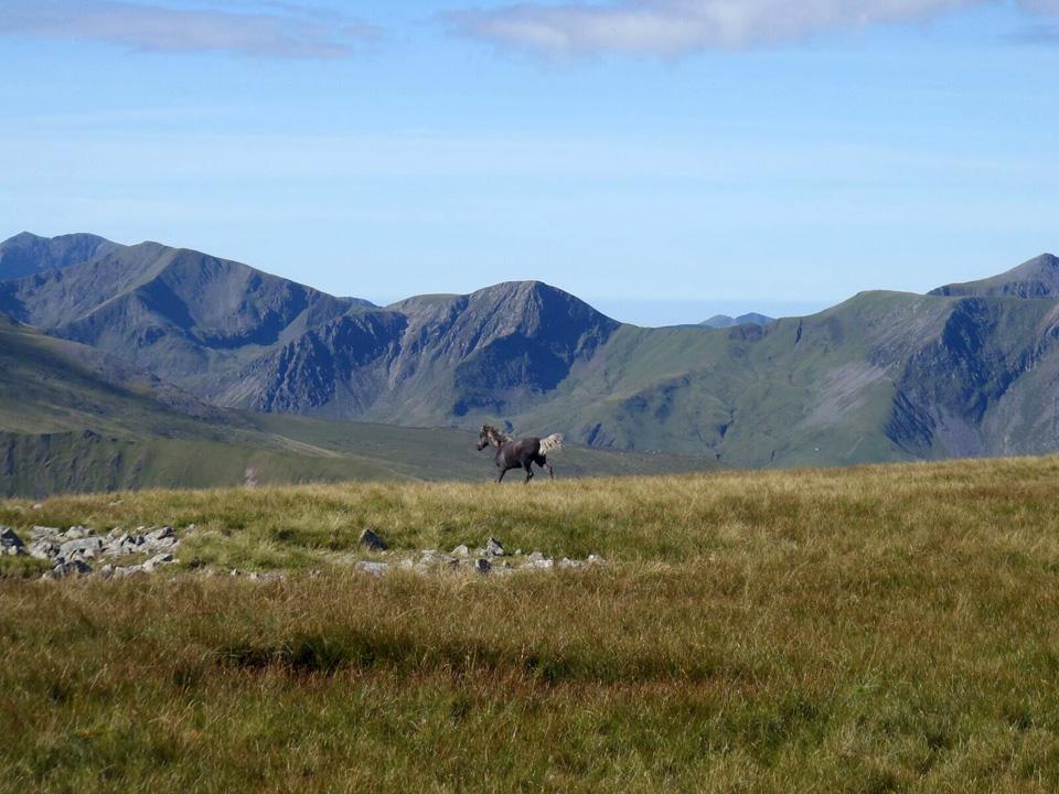 horse - Crossing the Carneddau - High Land, Far Flung